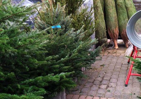 Weihnachtsbaumverkauf in Bad Tabarz