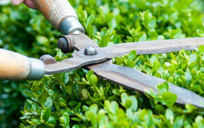 Gartengeräte und Gartenwerkzeuge